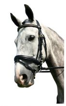 Sabre Cordoba Brass Flash Snaffle Comfort Bridle only with additional FREE BRASS CHAIN BROWBAND !!